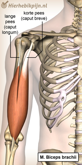 bicepstenditis